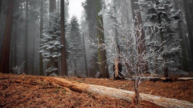 Одягайтеся тепліше: морозна стихія пощипає харків'ян за щічки 2 грудня