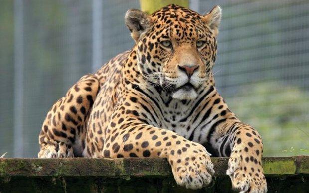 Воспитанник зоопарка вырвался на свободу: 6 погибших, 3 раненых
