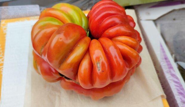 Гигантский помидор, facebook.com/Holovatenko
