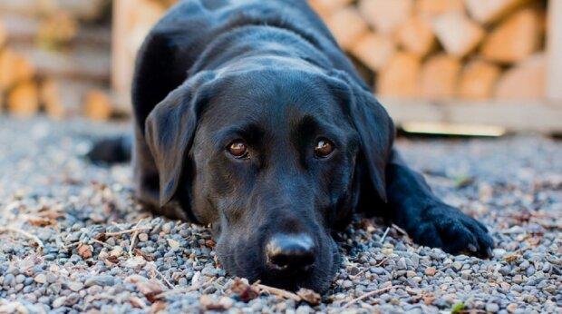 """""""Були покриті блохами, кліщами та фекаліями"""": на узбіччі дороги знайшли мати-собаку, прив'язану до маленької """"в'язниці"""" з цуценятами"""