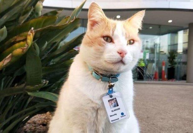 Кот регулярно приходил в больницу и его взяли на работу: появляется утром, а ночует дома у владельцев