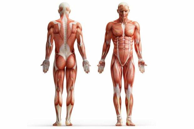 """Миллиарды лет понадобилось человеческому телу, чтобы стать идеальным: эволюция от """"А"""" до """"Я"""""""