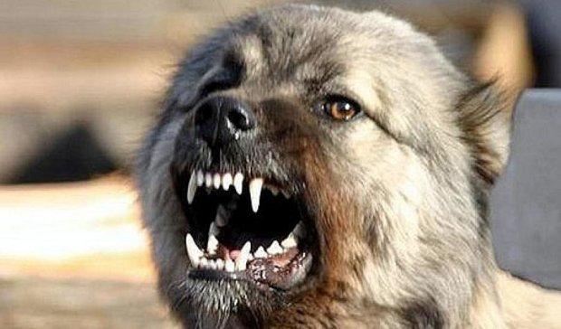 Житель Дніпропетровська помер від укусів власного скаженого собаки