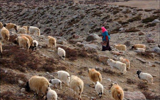 Дрони і комп'ютерні алгоритми замінять пастухів