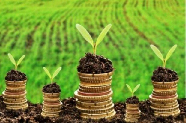 Пошук компромісу між детінізацією сектору й тиском на бізнес