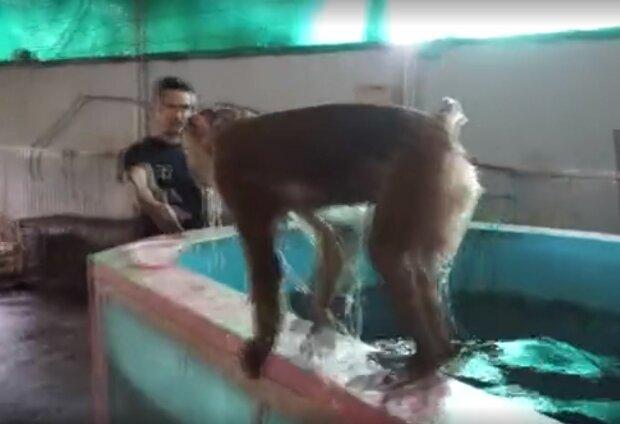 Мавпа, фото: YouTube
