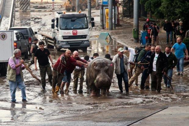 """Николаевский зоопарк """"поделится"""" животными с тбилисским"""