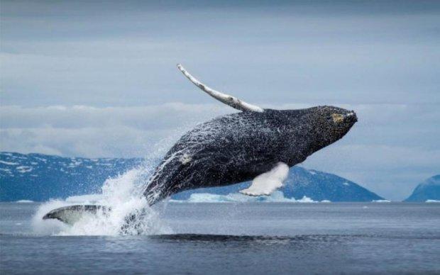 Не для слабонервных: черные гиганты выбросились на берег