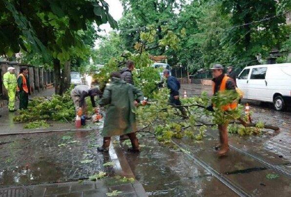 Десятки поваленных деревьев и поврежденные автомобили - стихия ворвалась во Львов и натворила бед, фото