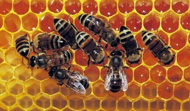 На Винничине лечат бойцов АТО пчелами