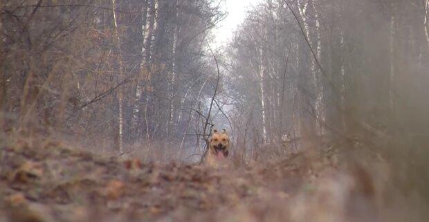Поганий хлопчик: пес приніс господареві людську ногу