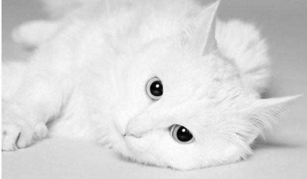 Кіт-діджей став зіркою YouTube