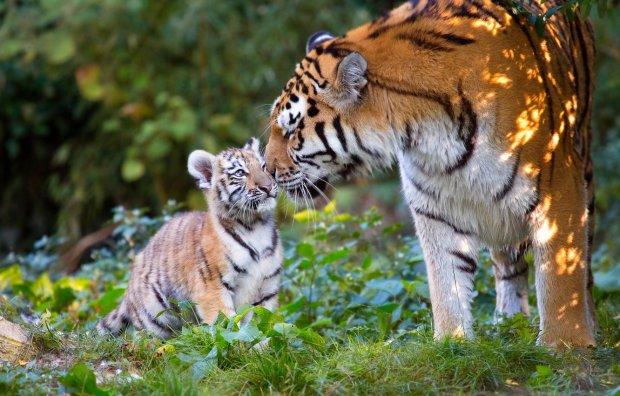Неймовірні кадри, які доводять: дикі тварини – найтурботливіші батьки