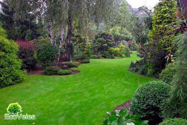 Популярные хвойные деревья и кустарники – укрась свой сад!
