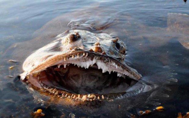 Підводні істоти, що шокували навіть досвідчених рибалок: фото