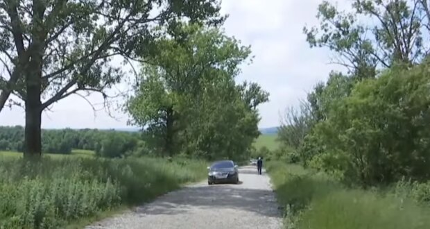 Тернопольщину атаковали тополи-убийцы