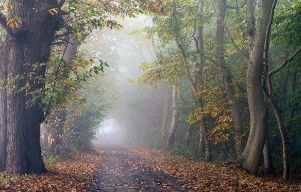 """Погода на 15 жовтня: Україна """"з головою"""" зануритися в загадковий осінній туман"""