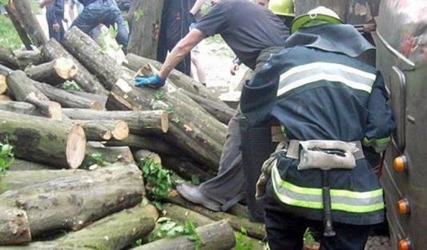 Ветер в Одессе повалял деревья (фото)