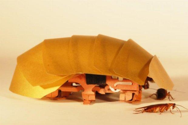 Тараканы станут прообразом робота с суперэкзоскелетом (видео)