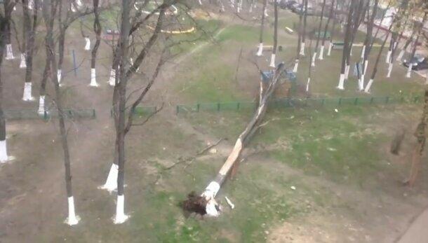 """В Киеве машину раздавило аварийное дерево, которое годами """"не видели"""" коммунальщики Кличко"""
