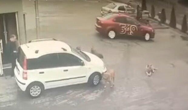 Тернополянин раздавил беззащитную малышку и дал по газам, но поймался в неожиданном месте
