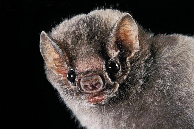 В яде мохноногих вампиров нашли лекарство от гипертонии