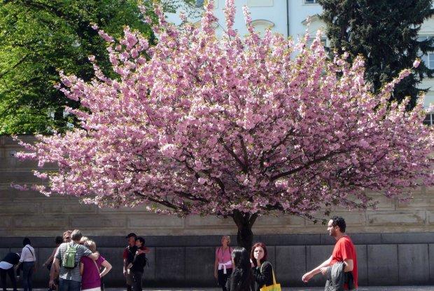 Синоптики приголомшили прогнозом на весну: +30 в квітні і холоднеча в травні