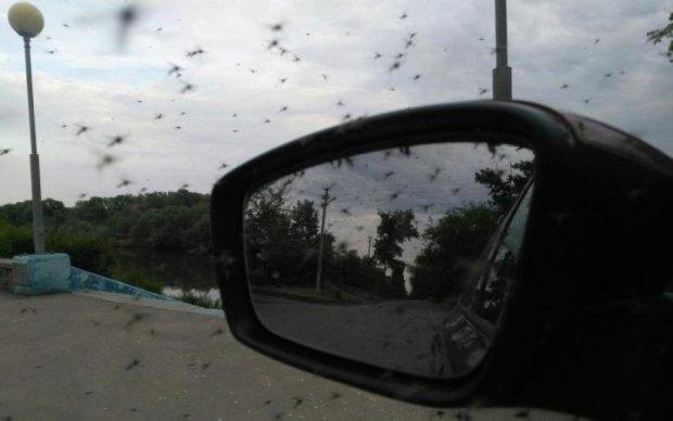 Яка бридота: на голови росіян посипався дощ з комах