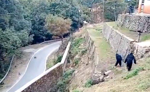 Індійські прикордонники в костюмах горил, скріншот: Twitter