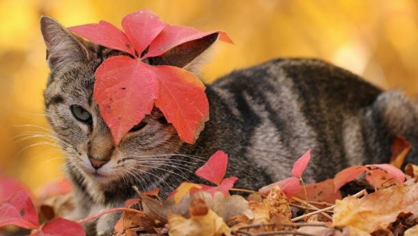 Котик осенью, 24tv