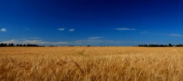 Українську землю скоро розпродадуть, скільки коштуватиме гектар