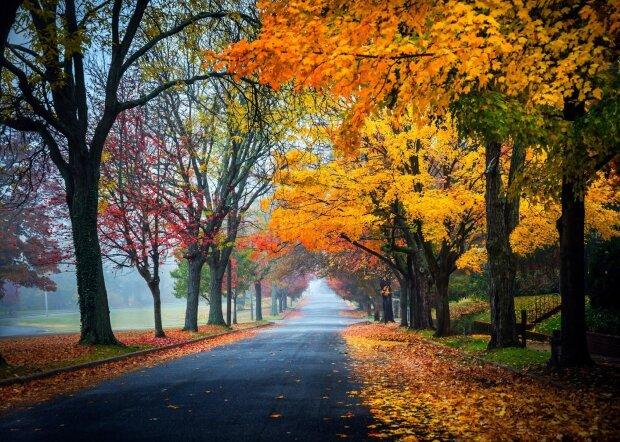 Погода в Запорожье на 4 ноября: в город ворвется теплая осень, синоптики пьют шампанское