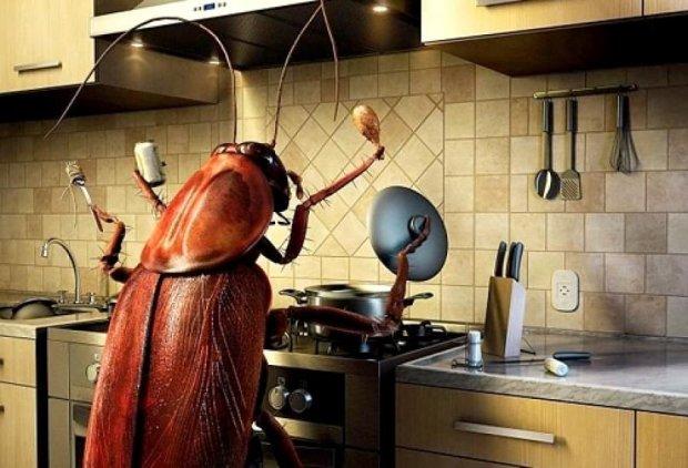 Из-за жары города начали атаковать насекомые