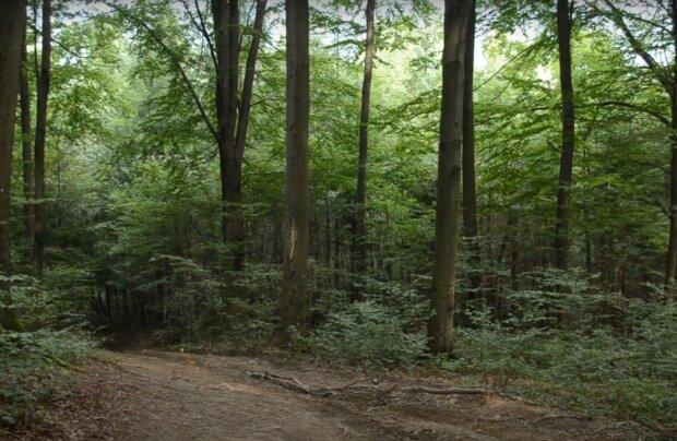 ліс, скріншот з відео