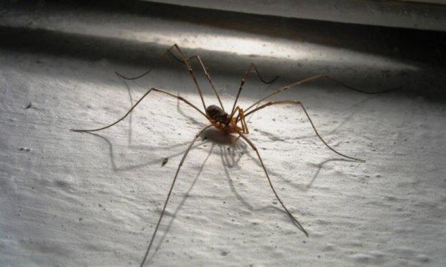 Учені навчили павуків плести надміцну павутину із графена