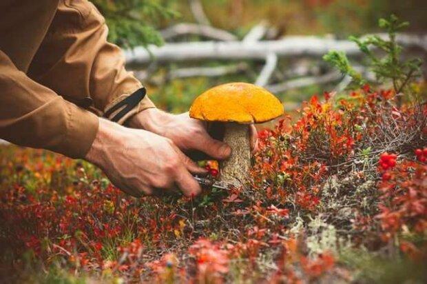 Перейшли на мухомори? Франківці масово отруїлися невідомими грибами