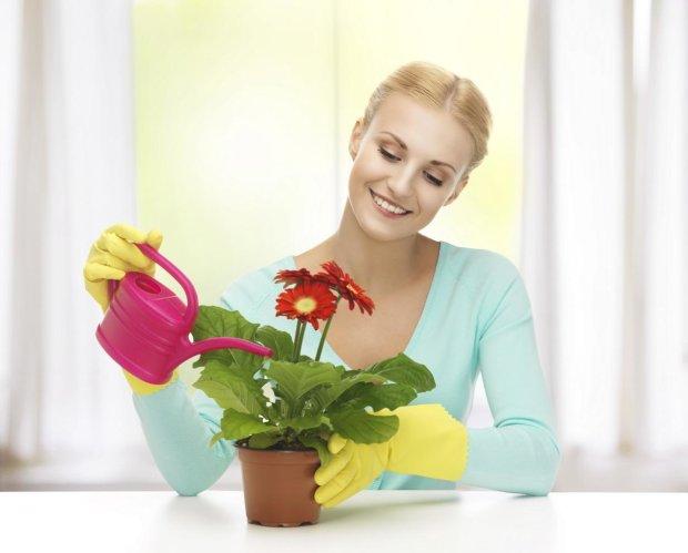 Користь кімнатних рослин: 3 найнесподіваніших переваги, які змусять вас бігти в квітковий магазин