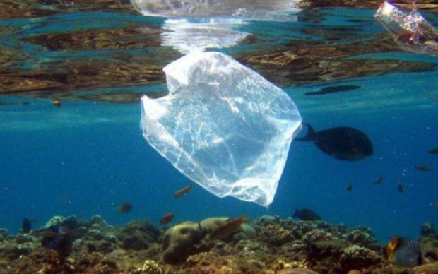 Вчені знайшли альтернативу вічному пластику