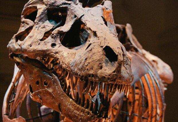 Динозавр, фото: GettyImages