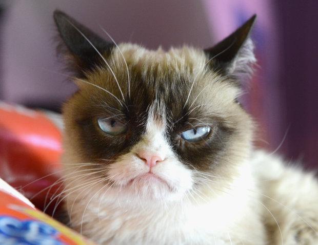 """Умерла легендарная """"сердитая"""" кошка Grumpy Cat: поднимала настроение миллионам"""