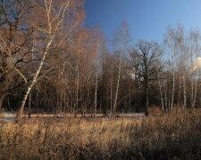Погода в Украине, фото: PhotoCentra