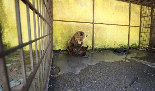 Защитники животных добились освобождения албанского медведя