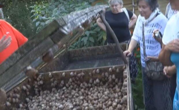 ферма улиток, скриншот из видео