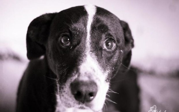 Живодерство в законе: за садистские операции над животными никто не в ответе
