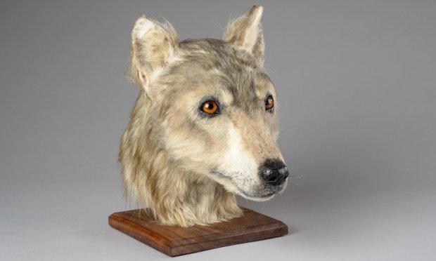 древній пес