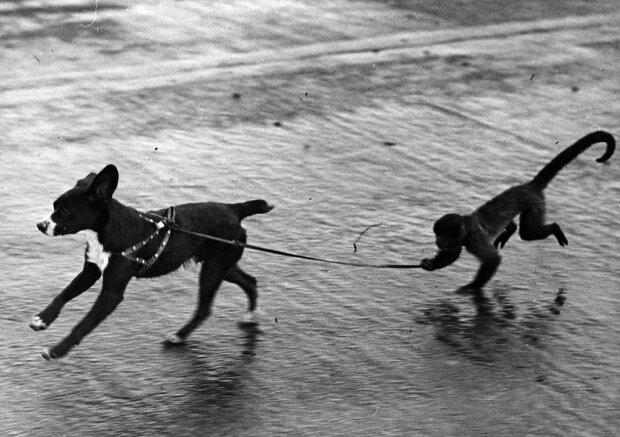 Собака, фото: Getty Images