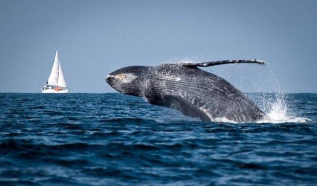 Серферша сняла прыжок кита вблизи