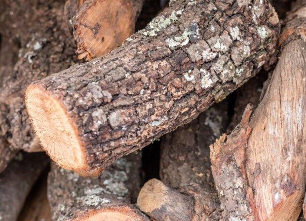 Андрей Малеваный рассказал, как наказывают за незаконную вырубку леса