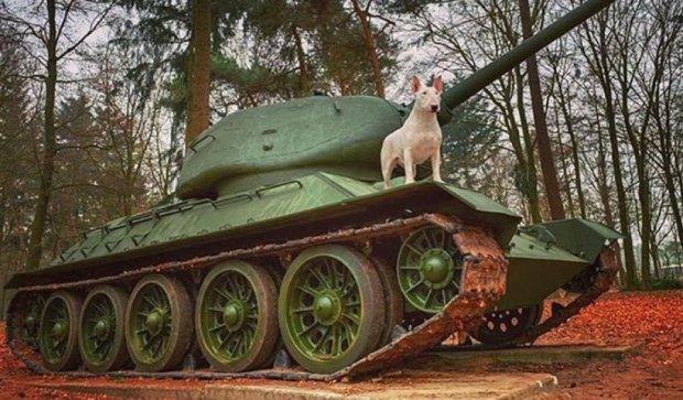 Собака в странных заброшенных местах (фото)