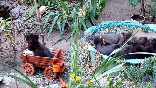 """В Днепре котятам построили отдельный городок: """"Не отличить от настоящего"""""""